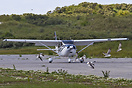 Taxiing a sport aircraft in the middle of a seagull colony demands pat...