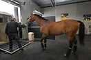 Equestrian horses begin boarding airplanes for 2016 Rio Olympics Liege...