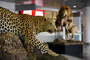 International Terminal is Decorated by African Wild Animals