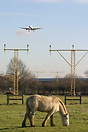 A horse a bird and a few aircraft on the ILS for runway 27L