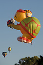 Up Up and away from Innes Common, Hamilton at Waikato Balloon Festival...